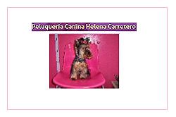 Peluquería Canina Helena Carretero en Móstoles